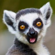 lemurfart